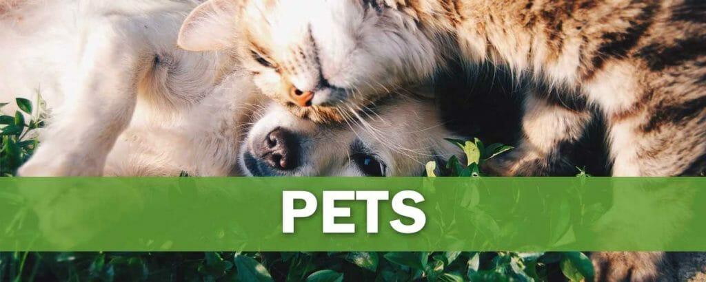 pets-niche-banner