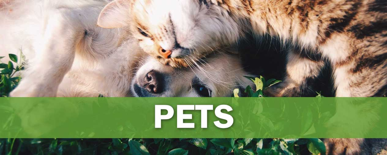 pet products niche banner