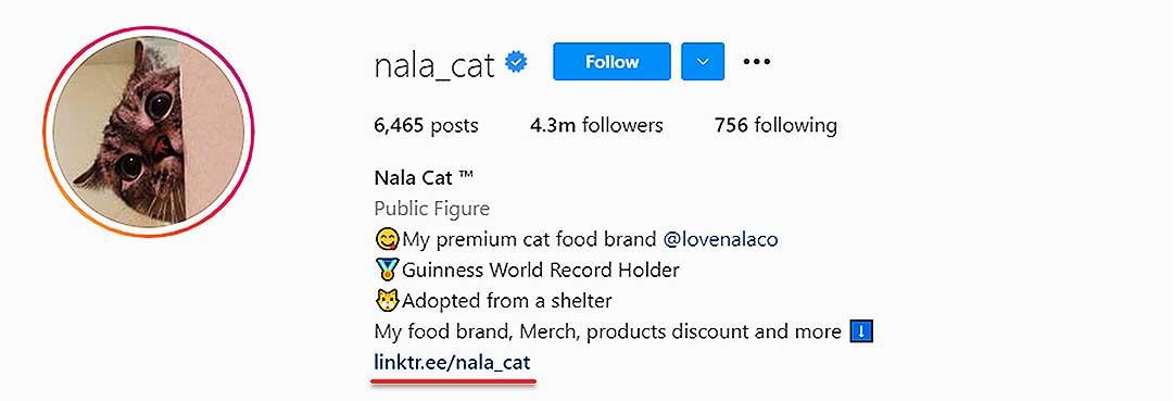 nala_cat instagram page